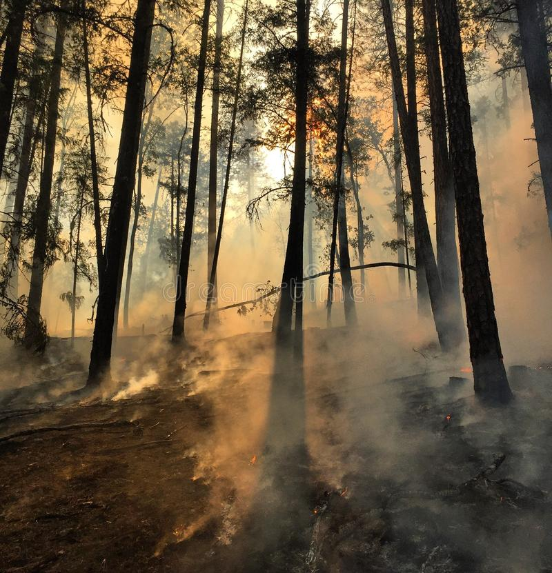 Smoke on forest floor royalty free stock images