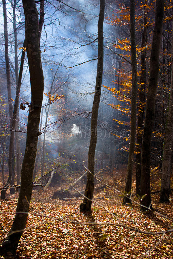 Smoke in the forest. stock images