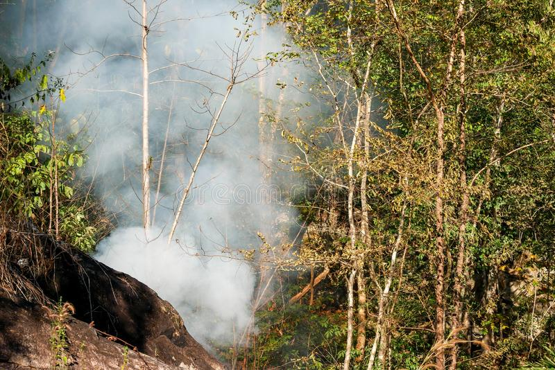 Smoke prairie fire. Dry grass blazes among bushes destruction of forests stock images