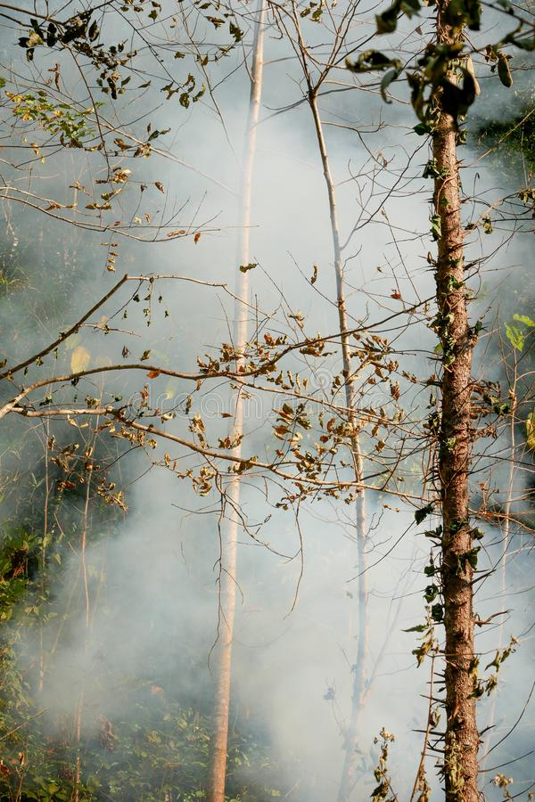 Smoke prairie fire. Dry grass blazes among bushes destruction of forests royalty free stock photo