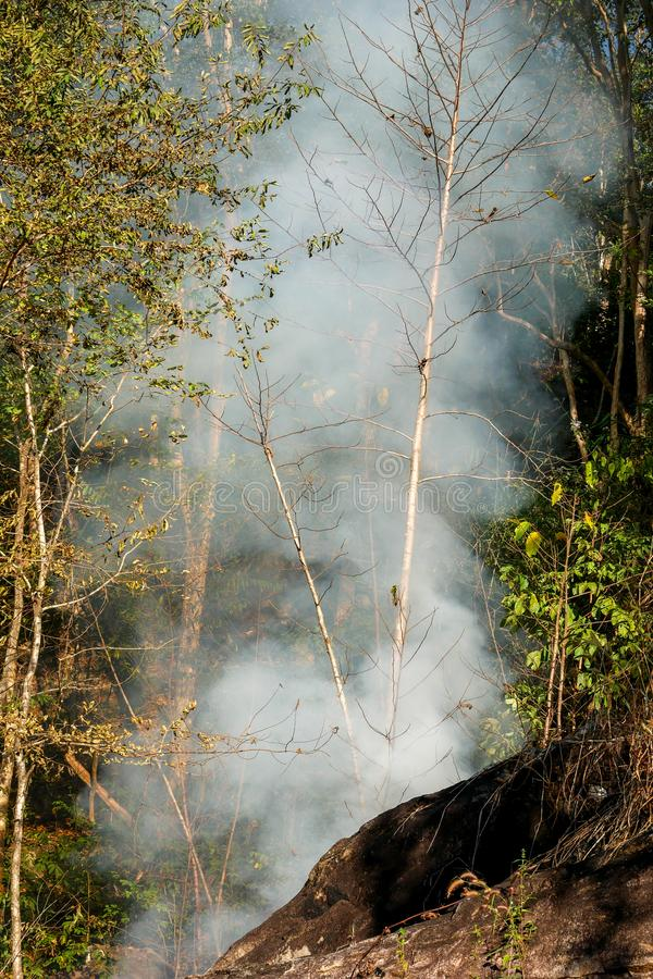 Smoke prairie fire. Dry grass blazes among bushes destruction of forests stock image