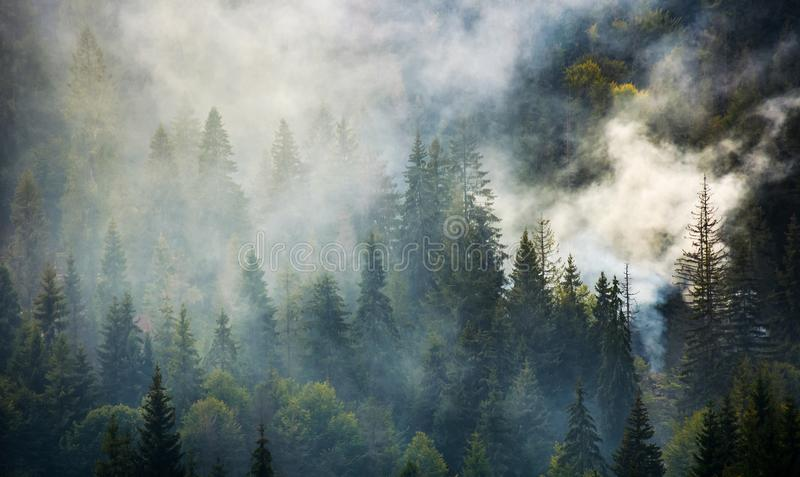 Smoke rise above spruce forest royalty free stock photography