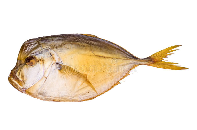 Download Smoked atlantic moonfish stock photo. Image of white - 33193532