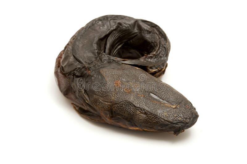 Smoked torkade havskatten arkivfoto