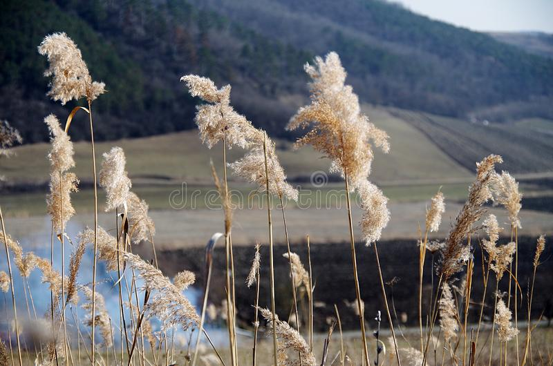 Smokes And Reeds. Artistic perspective of dried out reeds and smoke rising in the distance stock photography