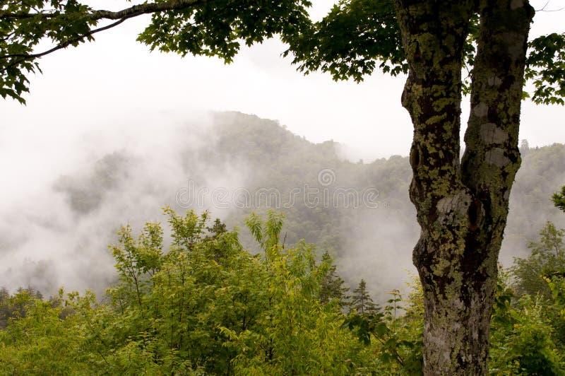 smokey βουνών στοκ φωτογραφία