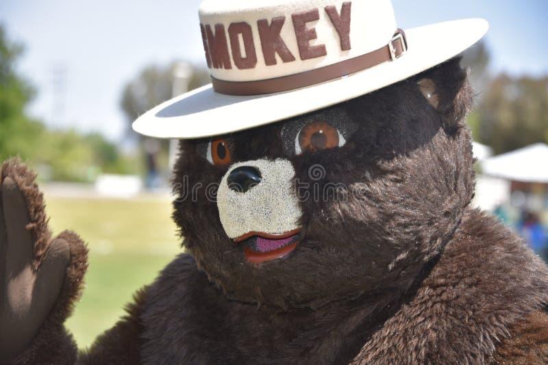 Smokey björnen royaltyfria bilder