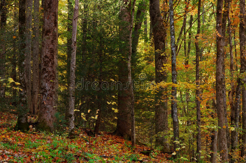 Download Smokey Mountains stock image. Image of mountains, forest - 3842659