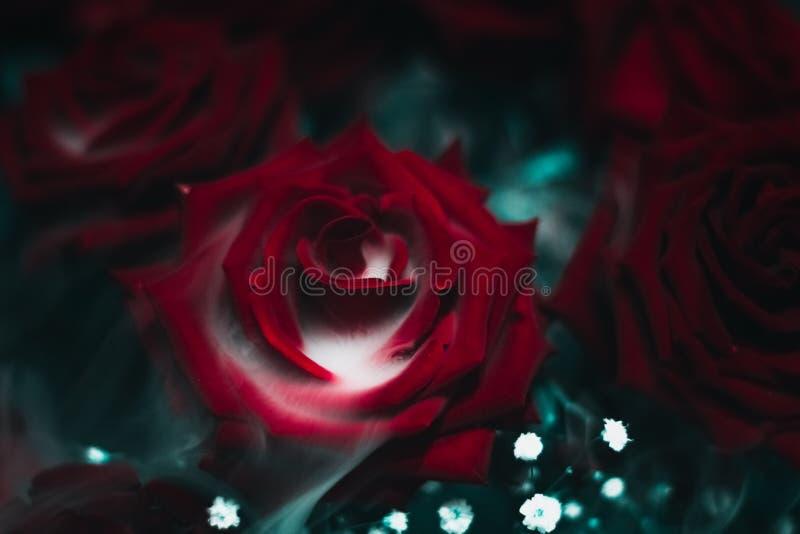 Smokey Red Rose Flower royalty-vrije stock afbeeldingen