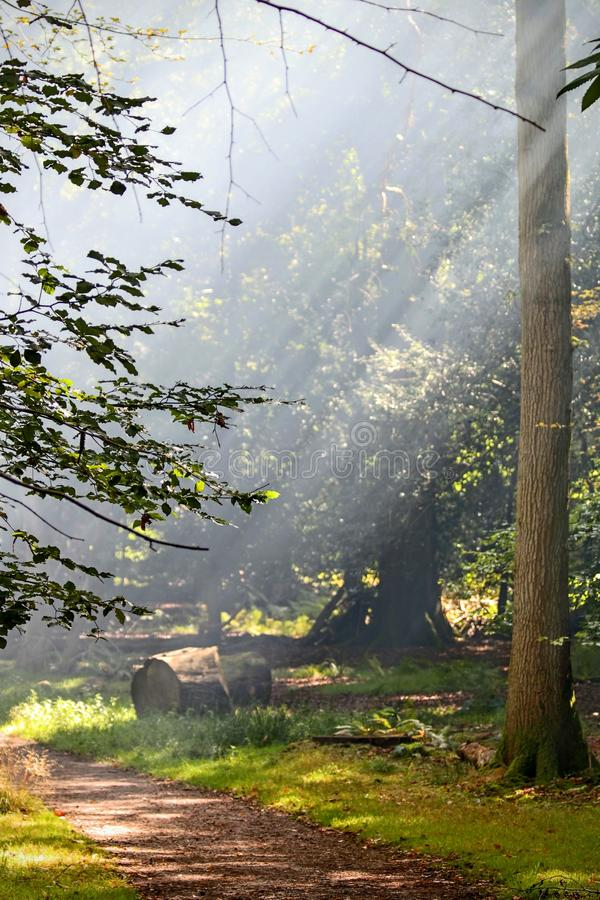 Smokey skogsmark royaltyfria bilder
