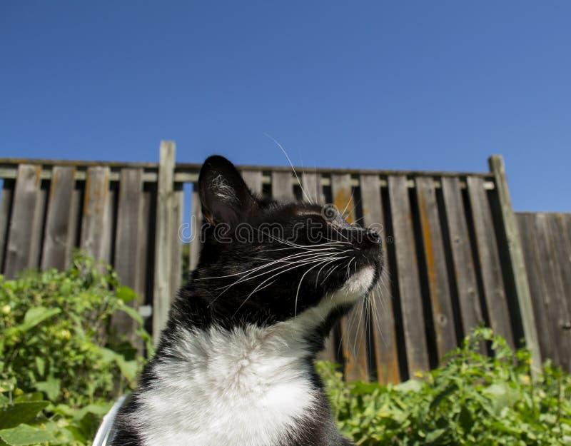 Smoking blanco y negro Cat Outdoors fotos de archivo
