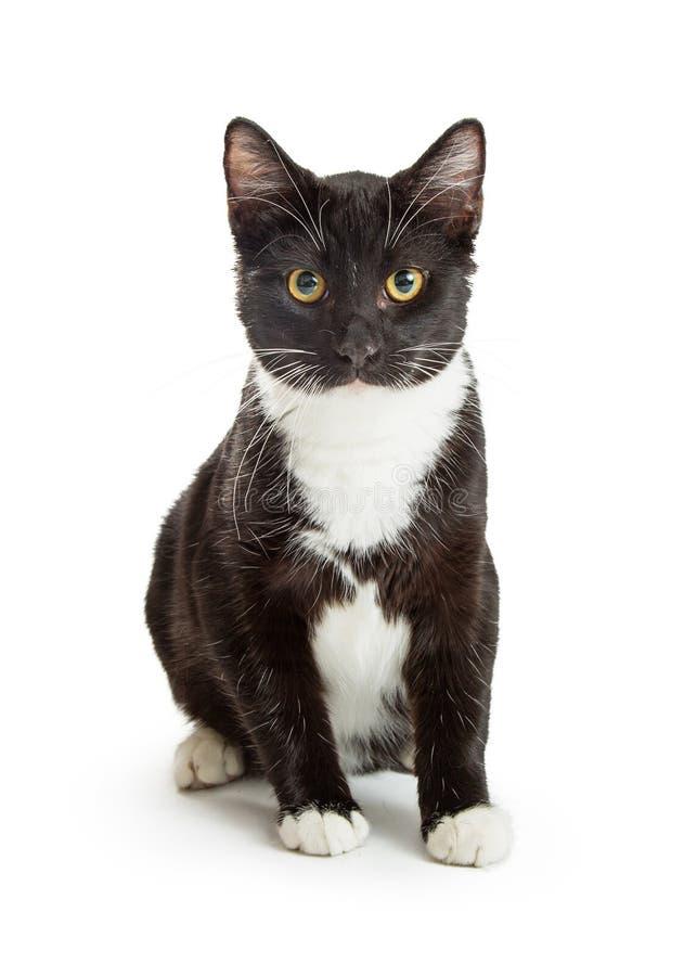 Smoking Cat Black e seduta bianca fotografia stock