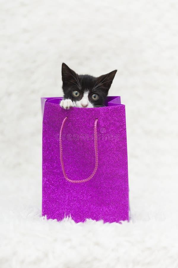 Smoking Kitten Peeking Out di una borsa rosa del regalo, fondo bianco della sfuocatura fotografia stock