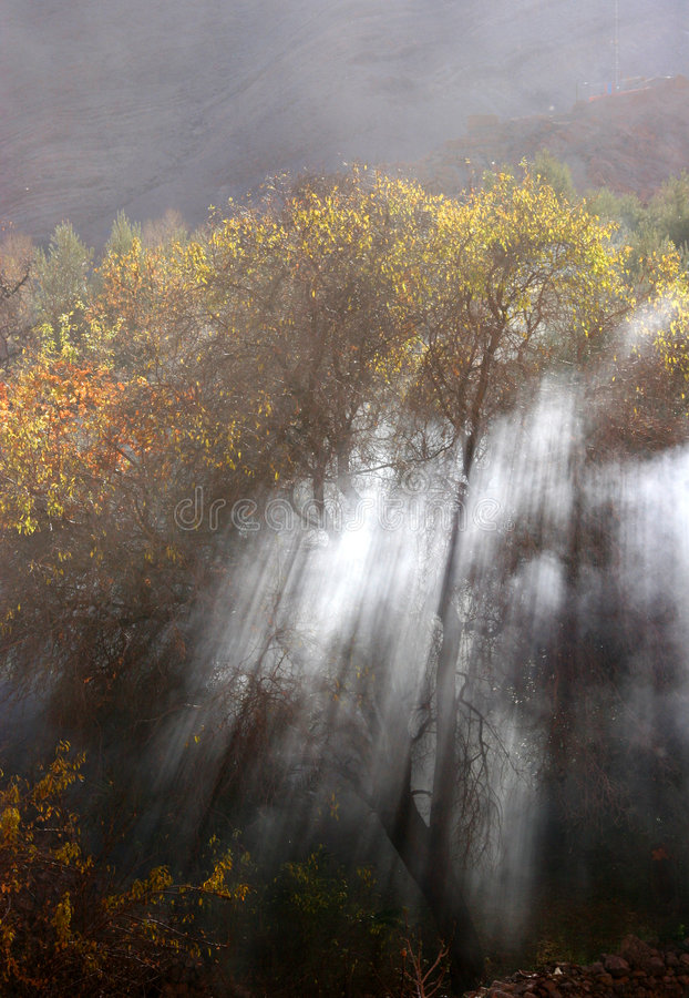 Smoky forest stock images