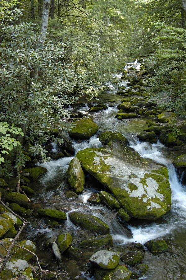 Smoky Mountains Stream & Falls royalty free stock photos