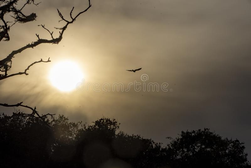 Smoky Skies at dusk due to the Santa Barbara Cave Fire royalty free stock photo