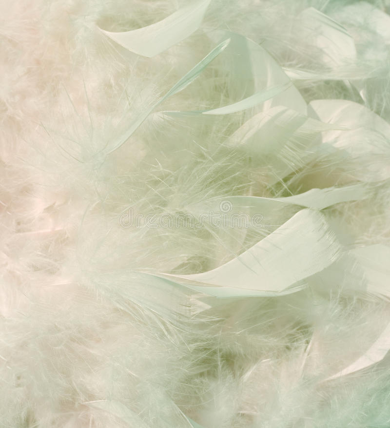 Download Smoky Snow White And Pink Feathers Background Stock Photo - Image: 15823186