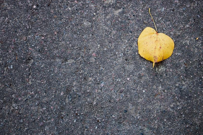Smooth asphalt road. The texture of the pavement, top view. Autumn leaf on the pavement. Autumn leaf background. royalty free stock photos
