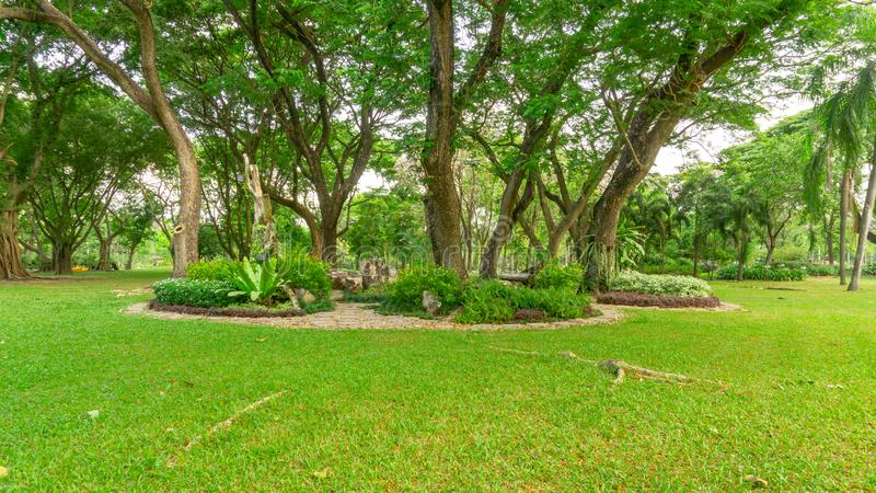Smooth green grass lawn in good care maintenance garden, decorated with flowering plant, shrub and bush under shading trees. Smooth green grass lawn in good care stock images