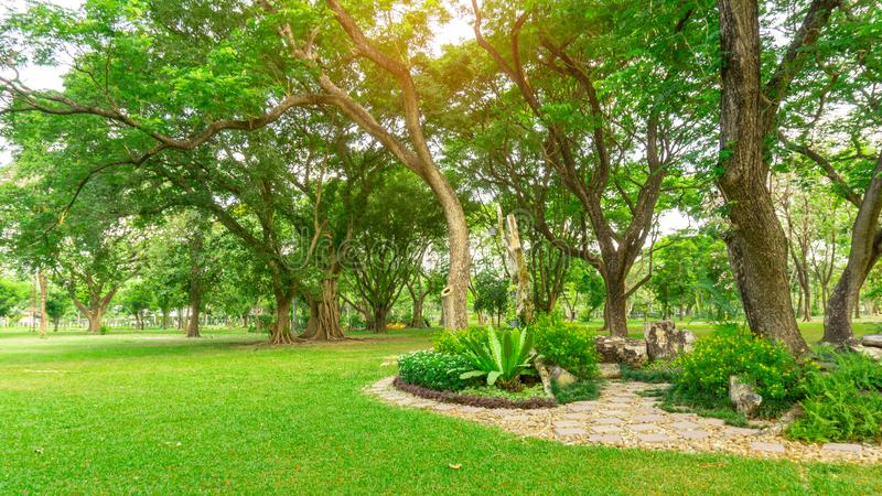 Smooth green grass lawn in good care maintenance garden, decorated with flowering plant, shrub and bush under shading trees. Smooth green grass lawn in good care stock photo