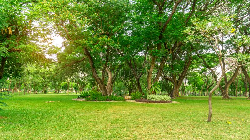 Smooth green grass lawn in good care maintenance garden, flowering plant, shrub and bush under shading the Rain oak trees. In a park royalty free stock image