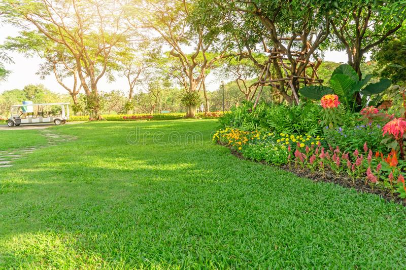 Smooth green grass lawn in good care maintenance garden, flowering plant, shurb and trees on backyard under morning sunlight. Small pattern of grey concrete stock image