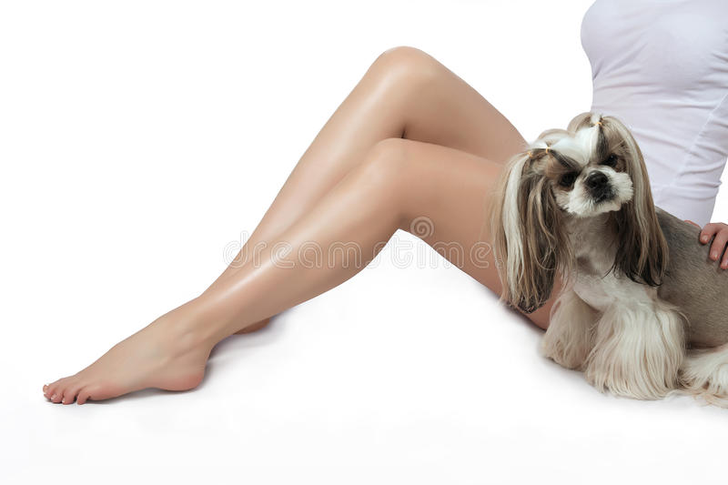 Smooth and silky female feet. Depilation. Shugaring. Little shih-tzu. royalty free stock image