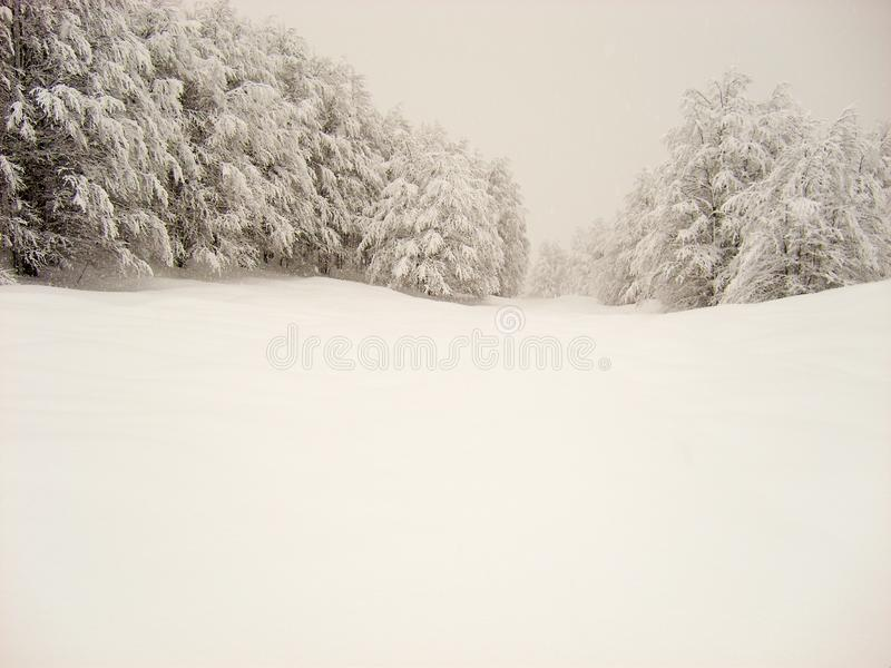 Smooth snow field with snow covered pine trees. Smooth soft snow covered hills with snow covered trees and pines with a small amount of fog stock photos
