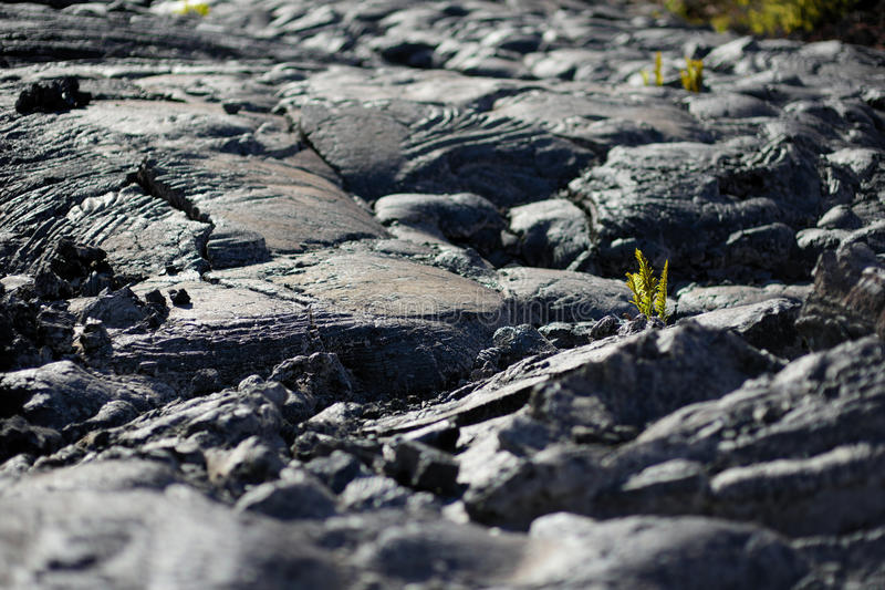 Smooth, undulating surface of frozen pahoehoe lava. Frozen lava wrinkled in tapestry-like folds and rolls resembling twisted rope. On Big Island of Hawaii, USA stock photos