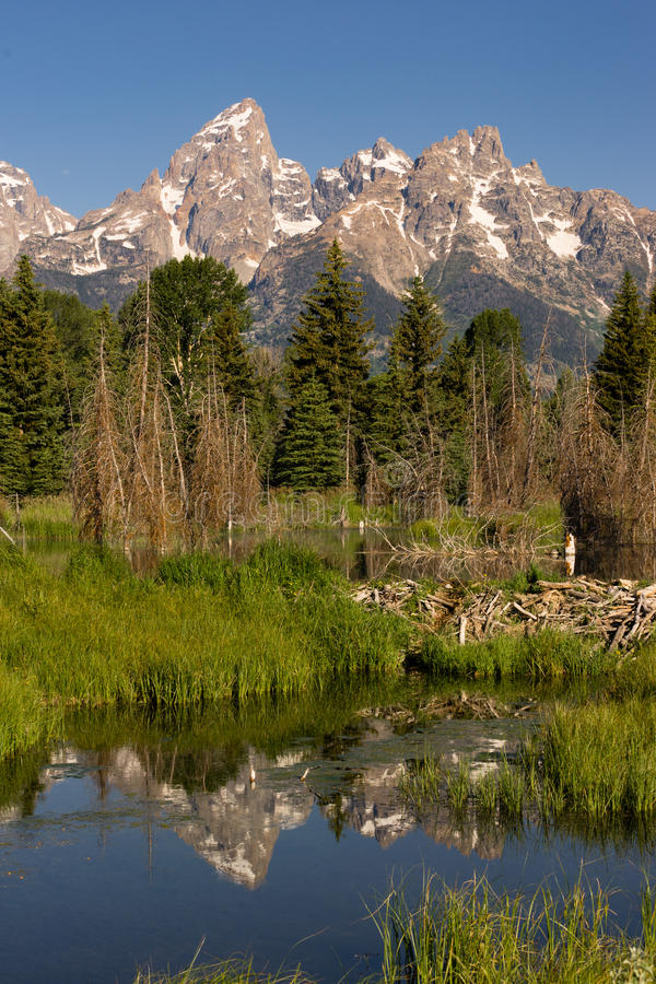 Smooth Water Beaver Dam Mountains Grand Teton National Park. The water is perfectly smooth showing high peak reflections in the Teton's below this Beaver Dam royalty free stock images