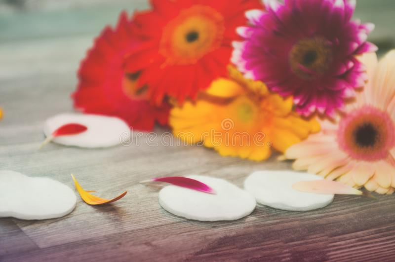 Smoothing cotton pads. Live flowers on the background with cotton discs, sponge. Smoothing toner and cotton pads Smoothing toner and cotton pads. Smoothing royalty free stock photos
