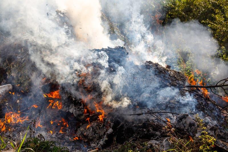 Smouldering огонь smokey умирая стоковые изображения