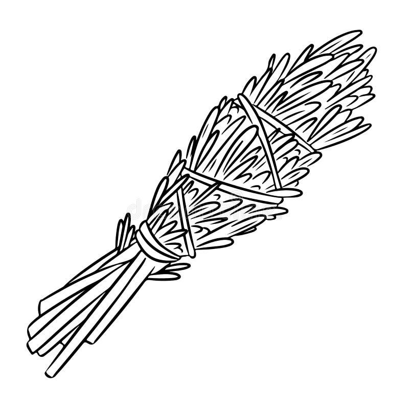Мудрым иллюстрация ручки smudge нарисованным вручную изолированная doodle Пачка травы Розмари иллюстрация вектора