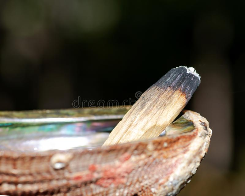 Smudging ceremony using Peruvian Palo Santo holy wood incense stick and abalone shell in forest royalty free stock images