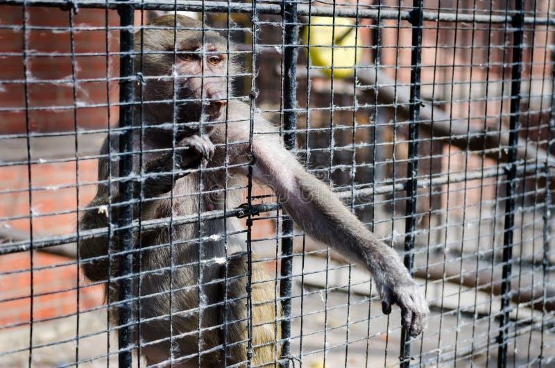 Smutna małpa fotografia stock