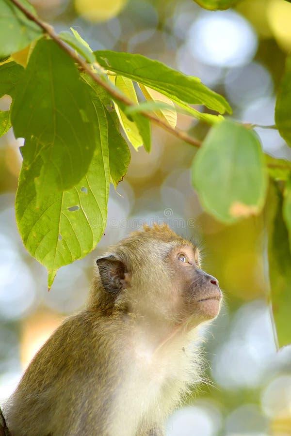 Smutna małpa obrazy royalty free