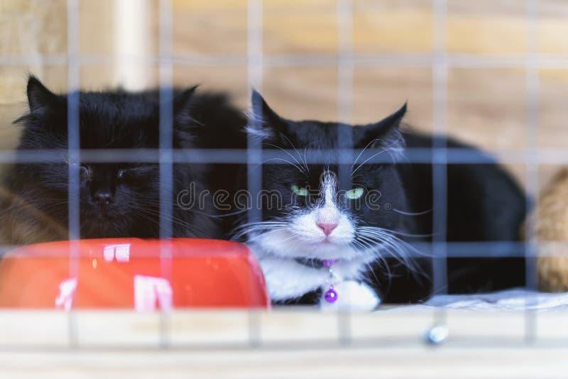 Smutni bezdomni samotni koty z zielonymi oczami, przyglądającymi od klatki za barami w schroniskowym czekaniu dla someone adoptow zdjęcia stock