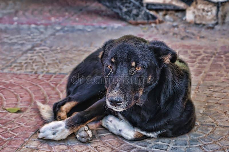 Smutni przybłąkanego psa kłamstwa obraz royalty free