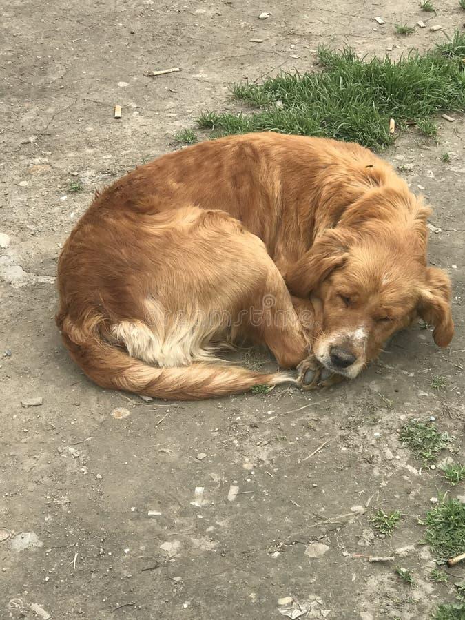 Smutni ulica psy obrazy royalty free