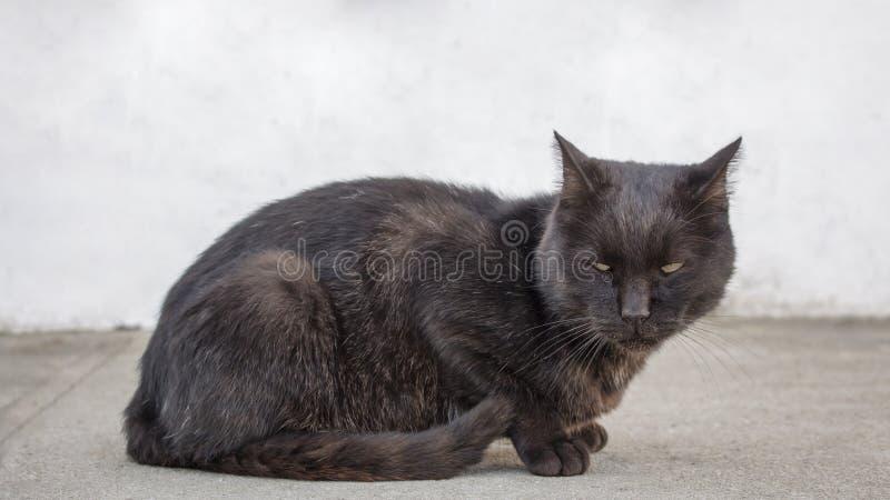 Smutny i przygnębiony przybłąkany czarny kot patrzeje podejrzany przy coś Zaniechany kot patrzeje zdewastowany z brudem w usta zdjęcia stock