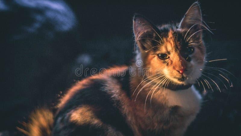 Smutny kot w ranku zdjęcie stock