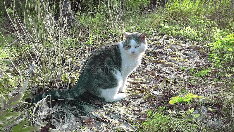 Smutny kot w wczesnej jesieni obrazy royalty free