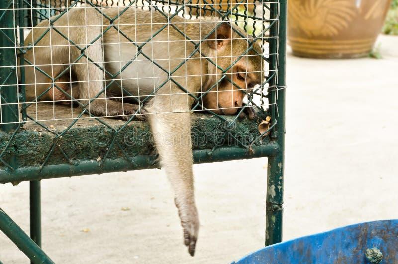 Smutny małpi klatkowy zdjęcia stock