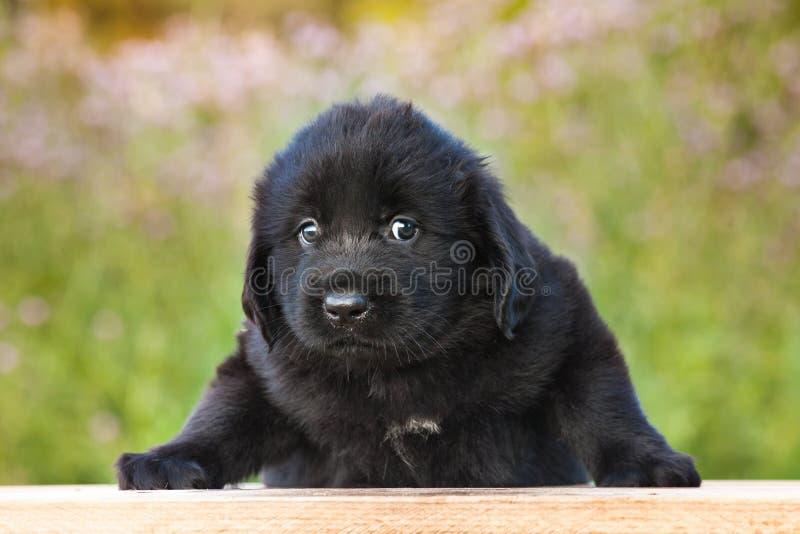 Smutny Mały Czarny szczeniak fotografia stock
