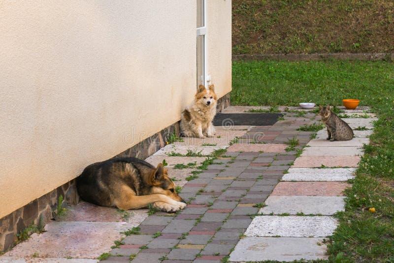 Smutny pies, zainteresowany pies i ciekawy kot, Ciekawa firma zabawę zdjęcia stock