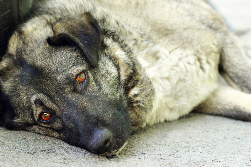 Smutny przybłąkany pies fotografia stock