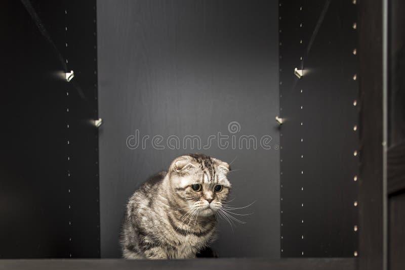 Smutny zapominający osamotniony kot siedzi w szafie obrazy stock
