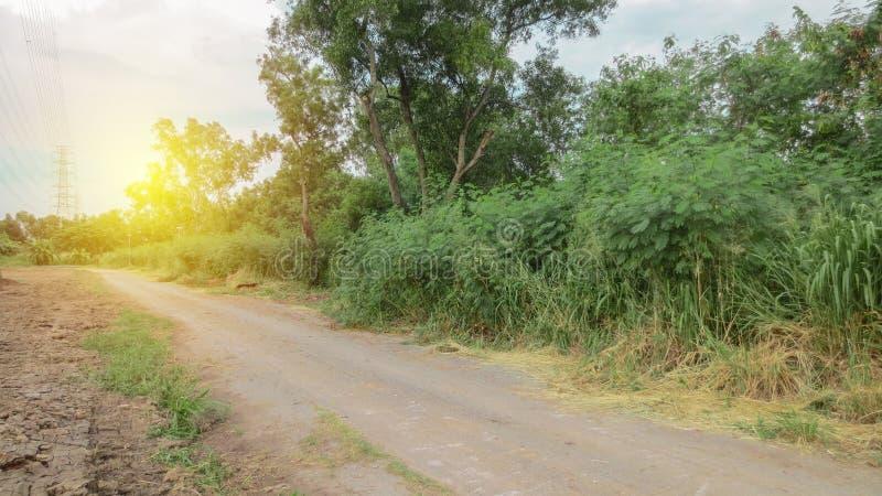Smuts i landsväg med signalljuset arkivfoto