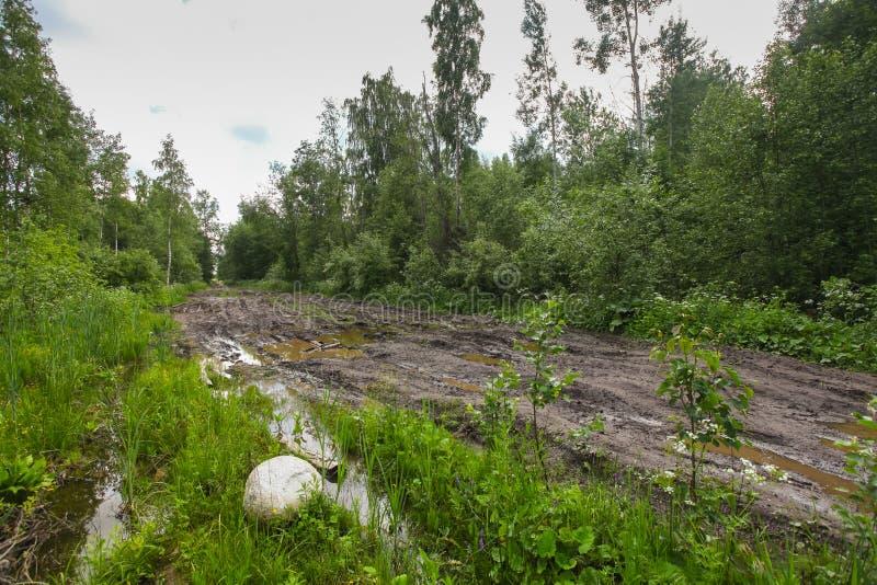 Smutsa ner den smutsiga vägen till och med skog med pölar arkivfoton