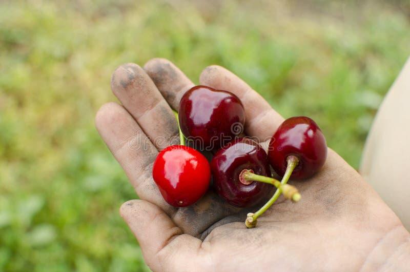 Smutsa ner händer med frukt Barn hygien, begreppet av riktigt hy arkivfoto